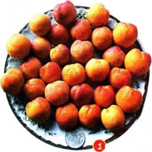 плоды у абрикосов