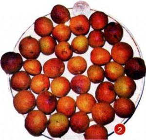 абрикосы с этих деревьев