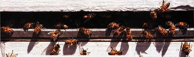 займет пчела
