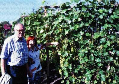 Сибирь виноградная