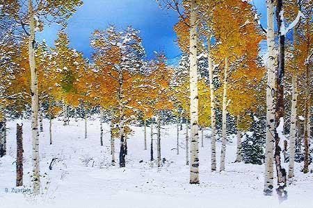 Зима нынче пришла рано