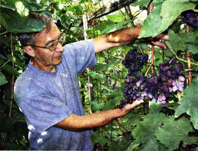 посетить их виноградник
