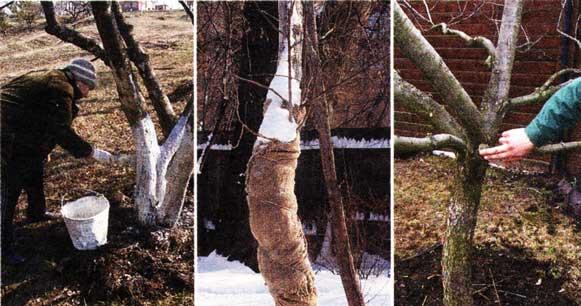 подлечить деревья
