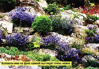 место в каменистом саду