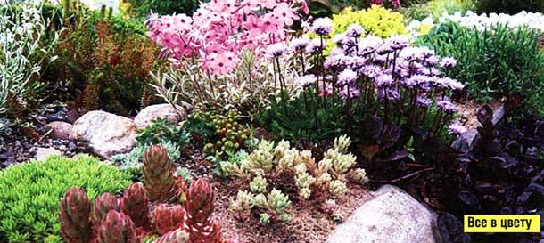 Выбор растений велик