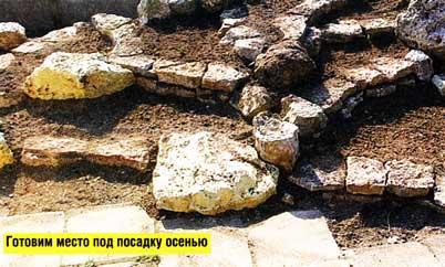 Каменистые садики