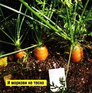 для посева семян