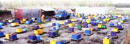 Зимовка пчел в синтетических ульях