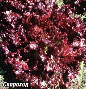листовых салатов