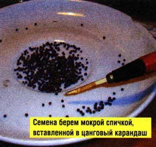 Семена высыпаются