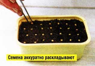 выращивания рассады капусты