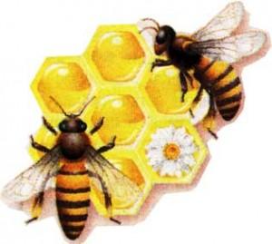 сборе пчелами нектара