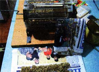 Подсохшие семена