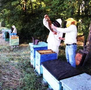 российское пчеловодство