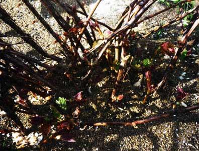 В майском винограднике