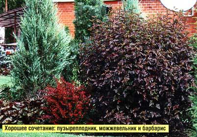 окраски листьев