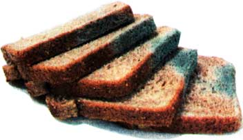 о болезнях хлеба