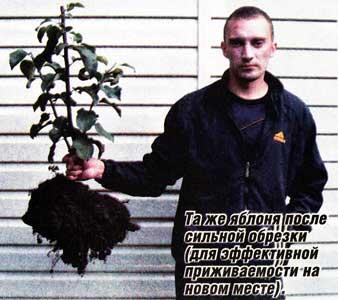 выращивания плодовых растений