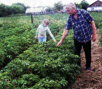 обрывания цветков картофеля