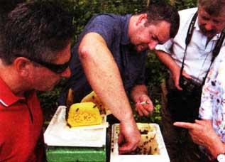 живут пчелы