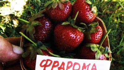 ягоды настолько вкусны