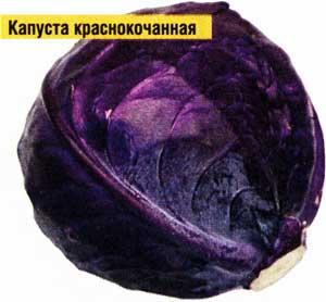 Краснокочанную капусту