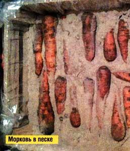 Сохранить морковь