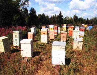 об отравлении пчел