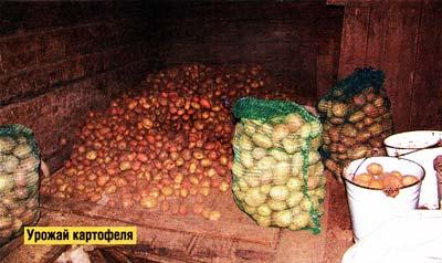 картофельного надела