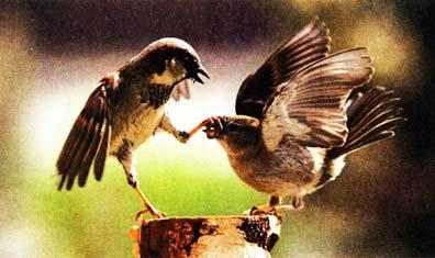 Птичек не обижал