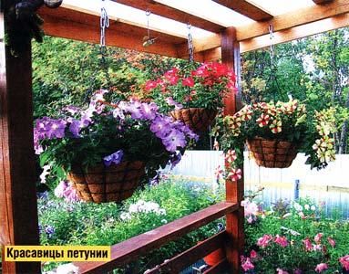 Цветы в контейнерах и горшках