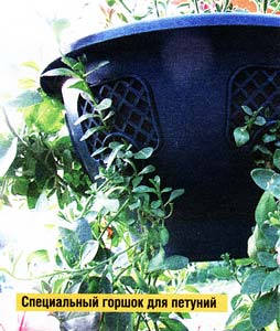 растения в подвесных кашпо