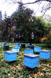 гибель пчелиных семей