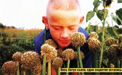 я выращиваю лук батун