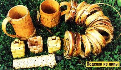 древесина липы