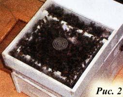 нуклеусного улья