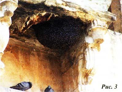 огромный рой пчел