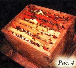 ульи с пчелами