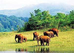 удивительная флора и фауна