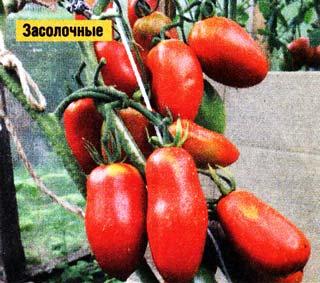 семена замачиваю