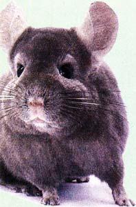 отпугивает мышей