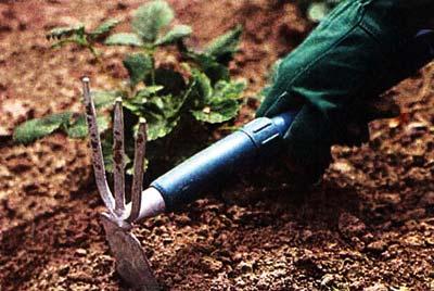нужно ли рыхлить почву