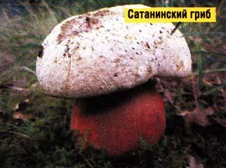 чёртов гриб