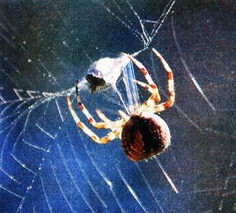 пауки безвредны
