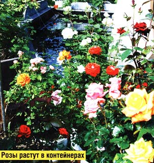 Цветочное убранство