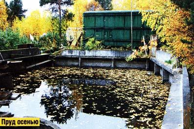 История маленького пруда