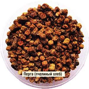 пчелиной перги
