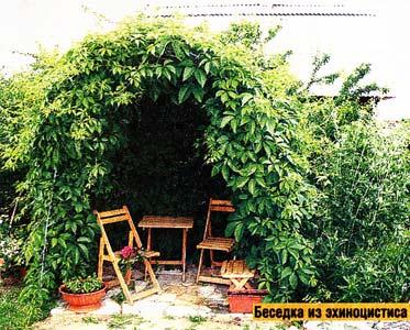 Великаны в саду