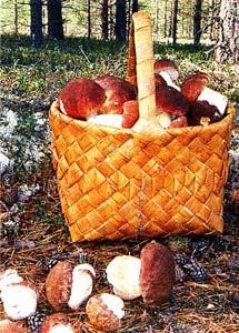 полянка с грибами