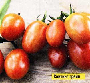 грейп-томат